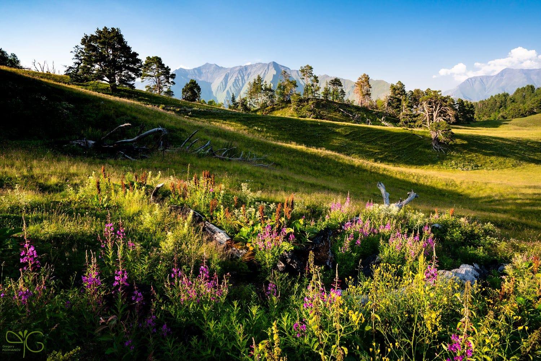 Высокогорная поляна в Дагестане ⛰