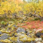 Заросли берёз на каменистом перешейке у Нижнего Полигонального озера