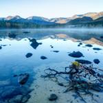 Коряга в устье Нижнего Полигонального озера