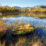 Болотистый берег Полигонального озера
