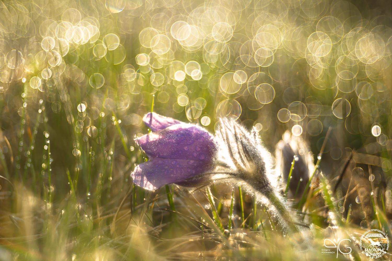 Звуки весны в Белогорье