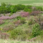 Цветущая балка Суры, Ямская Степь