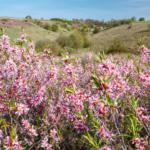 Вид на цветущую балку Суры, Ямская Степь