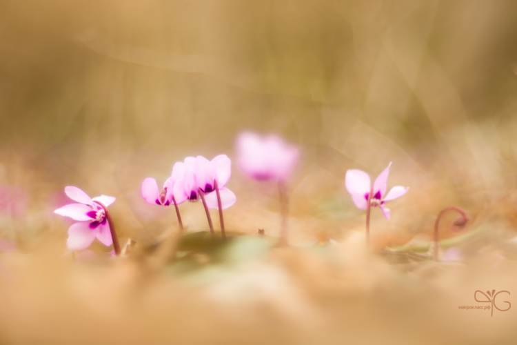 Розовые чудики